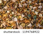 autumn leaves in park  | Shutterstock . vector #1194768922