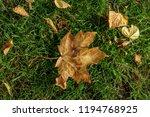 autumn leaves in park  | Shutterstock . vector #1194768925