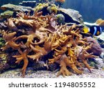 the yellow finger leather coral ... | Shutterstock . vector #1194805552