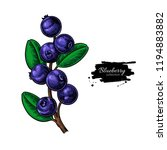 blueberry vector drawing.... | Shutterstock .eps vector #1194883882