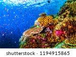 Underwater World Landscape....