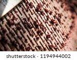 harvest of merlot in tuscany | Shutterstock . vector #1194944002