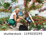 florist working in greenhouse | Shutterstock . vector #1195035295
