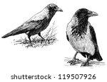 big crow | Shutterstock . vector #119507926
