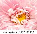 macro background of aster... | Shutterstock . vector #1195122958