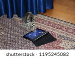 Stock photo kitten playing on the tablet 1195245082