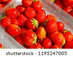 red ripe strawberries has been... | Shutterstock . vector #1195247005