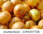 fresh onion as a dish... | Shutterstock . vector #1195247728
