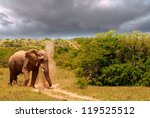Small photo of Elephant plod, plod, plodding along