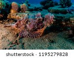 scorpion fish on the seabed  in ... | Shutterstock . vector #1195279828