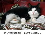 a black cat  with a white snout ... | Shutterstock . vector #1195328572