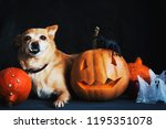 dog sit around happy halloween... | Shutterstock . vector #1195351078