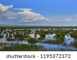 flower lake in aba  sichuan... | Shutterstock . vector #1195372372