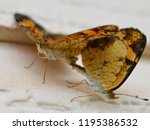 close up of 2 orange and black... | Shutterstock . vector #1195386532