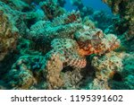 scorpion fish on the seabed  in ... | Shutterstock . vector #1195391602