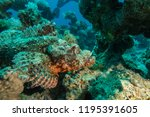 scorpion fish on the seabed  in ... | Shutterstock . vector #1195391605
