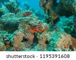 scorpion fish on the seabed  in ... | Shutterstock . vector #1195391608