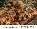 scorpion fish on the seabed  in ... | Shutterstock . vector #1195391632