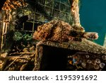 scorpion fish on the seabed  in ... | Shutterstock . vector #1195391692