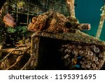 scorpion fish on the seabed  in ... | Shutterstock . vector #1195391695
