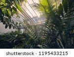 indoors of green house  botanic ... | Shutterstock . vector #1195433215