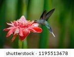 shiny bird flying next to...   Shutterstock . vector #1195513678