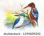 kingfisher bird water color... | Shutterstock . vector #1195609342