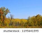 autumn yellow forest. yellow...   Shutterstock . vector #1195641595