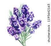 lavender  bouquet flowers on an ... | Shutterstock . vector #1195642165