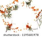 frame of sea buckthorn ... | Shutterstock . vector #1195681978