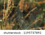 big cowweb among blades in... | Shutterstock . vector #1195737892