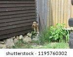 predatory bird hawk | Shutterstock . vector #1195760302