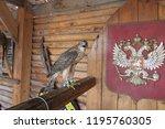 predatory bird hawk | Shutterstock . vector #1195760305