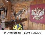 predatory bird hawk | Shutterstock . vector #1195760308
