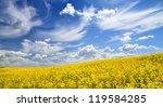 Yellow Rapeseed Field In Latvia