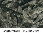 green leafy background filled... | Shutterstock . vector #1196059225