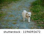a small shaggy dog of sand... | Shutterstock . vector #1196092672
