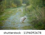 a small shaggy dog of sand... | Shutterstock . vector #1196092678