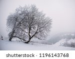close up on froze  tree in the... | Shutterstock . vector #1196143768