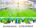 watering system in vegetables... | Shutterstock . vector #1196144065