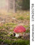 amanita muscaria. red poisonous ... | Shutterstock . vector #1196201758