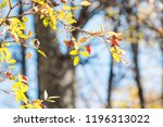 dogrose on hanging on a branch. ... | Shutterstock . vector #1196313022