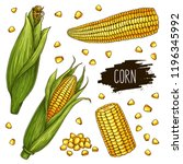 hand drawn corn set. isolated... | Shutterstock .eps vector #1196345992