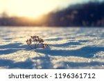 Frosty Grass At Winter Sunset....