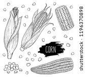 hand drawn vegetable set of... | Shutterstock .eps vector #1196370898