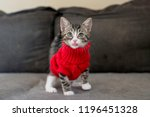 Stock photo tabby kitten wearing red sweater 1196451328