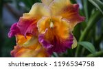 yellow purple orchid | Shutterstock . vector #1196534758