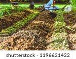 plant vegetables gardening at...   Shutterstock . vector #1196621422