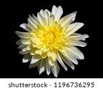 Closeup Of A Yellow White...