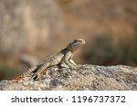 lizard sitting on stone... | Shutterstock . vector #1196737372
